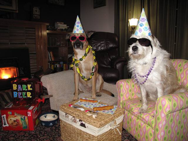 my moms idea of a new years party dogs